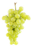 White grape cluste Royalty Free Stock Images
