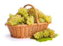 White grape clusters in basket. After harvest royalty free stock image