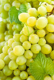 White grape. Green background Royalty Free Stock Images