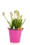 White grape hyacinths Royalty Free Stock Image