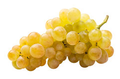 White grape (riesling) fully isolated. On the white Royalty Free Stock Photos