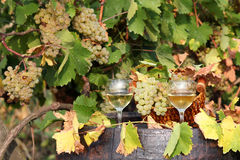 White grape and wine Stock Image
