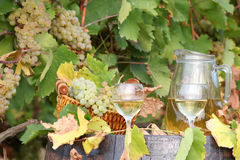 White grape and wine Stock Image