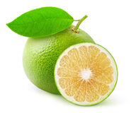 White grapefruit Stock Images