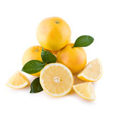 White grapefruits isolated Royalty Free Stock Images