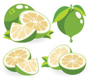 White grapefruits vector illustrations Stock Photo