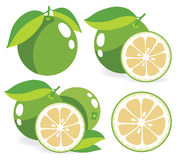 White grapefruits vector illustrations Royalty Free Stock Photography