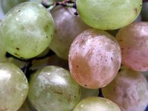 White grapes. Of my garden Royalty Free Stock Photography