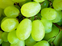 White grapes. Close up of a good white grapes in summer Royalty Free Stock Image