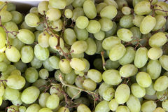 White Grapes Stock Image
