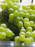 White grapes Royalty Free Stock Photos
