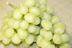 White grapes. Grapes royalty free stock images