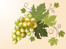 White grapes. On the pink background Royalty Free Stock Images