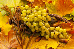 White grapes and acorns Stock Photos