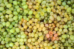 White grapes. Background - full frame of white grapes in wooden crates, ready for sale Royalty Free Stock Photography