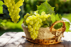 White grapes. In basket on garden table Royalty Free Stock Photo