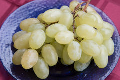 White grapes with drops of dew. Royalty Free Stock Image