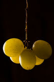 White Grapes Stock Image