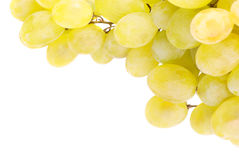 White grapes isolated on white Stock Photos