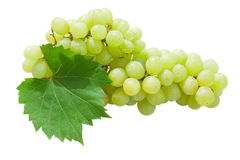 White grapes with leaves Stock Photography