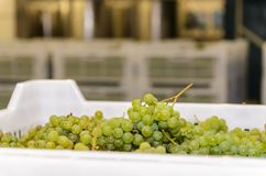 White grapes in a plastic box against other boxes stock photos
