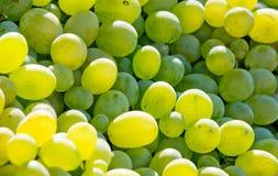 White grapes Royalty Free Stock Photos