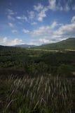 White grass flower in mountain, blue sky. White grass flower in mountain, beautiful blue sky Royalty Free Stock Photo