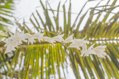 White grass flowers, bokeh background evening sunset Royalty Free Stock Photography