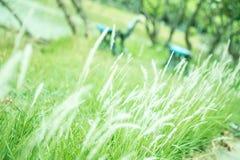 White grass in the garden. Morning Royalty Free Stock Photos
