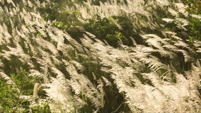 White grass the wind blows. stock footage
