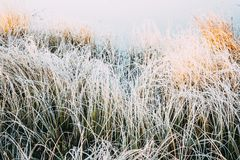 White the grasses in frost. Cold on the shore of the lake or river in the early morning royalty free stock image