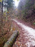 White gravel road in a november forest Royalty Free Stock Photography
