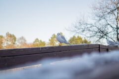 White and Gray Bird on Brown Wooden Handrail Stock Image