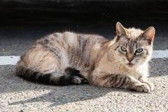 White gray cat with blue eyes lying on asphalt. Close up stock photo