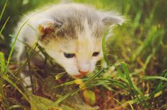 White and Gray Kitten in Grass Field during Daytime Stock Photos
