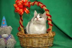 White with gray kitten stock photos