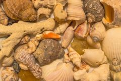 Shells of various shapes. White and gray shells, shellfish shells, curved corals. Trophies from the bottom of the sea. View from above, warm lighting Stock Photos