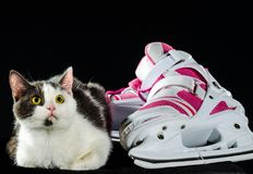 White with gray spots green-eyed cat looks warily up next to pin. K and new white female skates on a black background Royalty Free Stock Photos