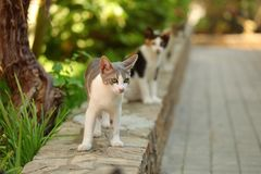 White and gray stray cat walking on curb of pavement, another on royalty free stock photos