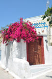 White greek bungalow with pink bougainvillea, santorin Stock Images