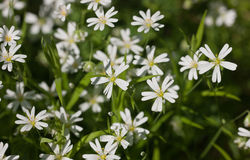 White on green Stock Photo