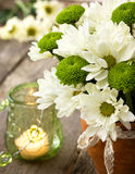 White and green chrysanthemums Royalty Free Stock Photos