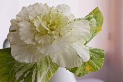 White and Green Flower Stock Photography