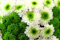 White and green flower background Royalty Free Stock Photo