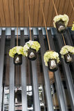 White and green flowers in black glass hanging. From ceiling for decoration Royalty Free Stock Photo