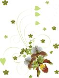 White and green orchids bouquet Stock Photos