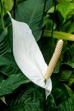 White on Green royalty free stock photography