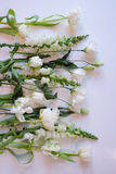 White and Green Row of Flowers Royalty Free Stock Photos