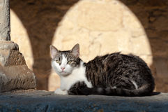 White and grey cat under sunset light Royalty Free Stock Photos