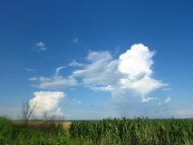 White and grey clouds in blue sky. Stormy rainy weather forecast. Air, cloudy sky, clouds, gloomy sky concept. Fair weather cumulus clouds over a maize field royalty free stock image